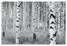 Fototapete Vliestapete Woods