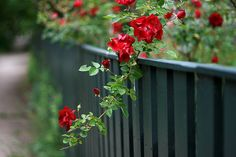 fence. by theresa
