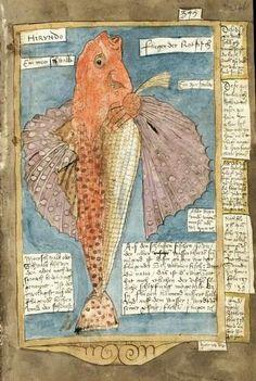 The Fishbook - Scheveningen Adriaen Coenensz, Or a really old art journal! Artist Journal, Art Journal Pages, Art Journals, Altered Books, Altered Art, Illustrations, Illustration Art, Book Art, Sibylla Merian