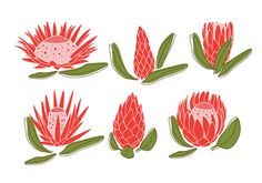 Protea Ceramic Painting, Fabric Painting, Rock Painting, Art Floral, Lino Art, Protea Flower, Engraving Printing, Pottery Painting Designs, Laser Art