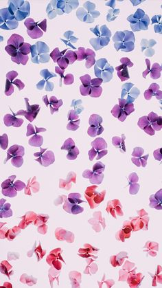 Flower rain ★ Download more floral iPhone Wallpapers at @prettywallpaper