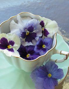 ✿  Cup full of pansies.