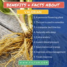 Filtur health, vitamin and supplement image section Perennial Flowering Plants, Lower Blood Pressure, Alternative Health, Stress Management, Insomnia, Ayurveda, Planting Flowers, Benefit, The Cure