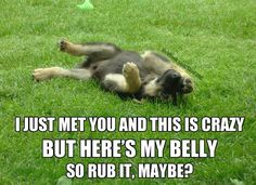 This has Daisy written all over it! She comes running, wiggles into my lap, and rolls over so I can rub her :)