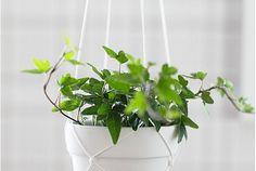Amplar i makramé – Macramé hanging planters