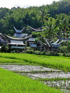 Sulawesi - Toraja - Rice Paddies near Rantepao Indonesia