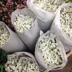 Bundles of Gypsophila (baby's breath) these are 25 stems in a pack. We can sell in 5 stems, from The Flowermonger, the wholesale floral home delivery service.