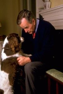 Former president George H. Bush enjoys some face-to-face time with his wife Barbara's springer spaniel, Millie, in Houston. The Bushes also kept one of Millie's puppies, Ranger, as a pet. Chien Springer, Springer Spaniel Puppies, Brittany Spaniel Dogs, English Springer Spaniels, Spaniel Breeds, Dog Grooming Business, Dogs And Puppies, Corgi Puppies, Doggies