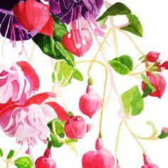 #fuschia #flowers #pink #watercolour #watercolor #art #beauty #brigitteklassenart