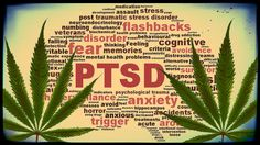 Toke Signals with Steve Elliott | Worth Repeating: Marijuana Treats Anxiety and Depression