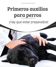 Primeros auxilios para perros. ¡Hay que estar preparados!  Encuentra todo lo que necesitas saber sobre los primeros auxilios para perros. Te lo explicamos todo en este artículo, además de técnicas y consejos. #salud #cuidar #atención #primerosauxilios