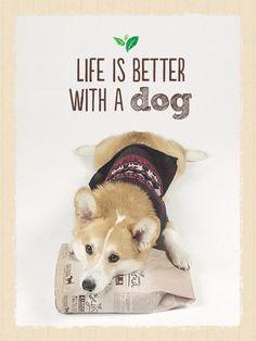 Dogs just naturally make our lives better. Photo via http://instagram.com/geordi_lacorgi