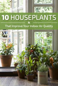 Luftreinigende Pflanzen: Dicke Luft in der Bude? Mit diesen zehn Pflanzen sagt I… Air Purifying Plants: Thick air in the stall? With these ten plants, your stifling indoor climate and harmful exhaust fumes will tell you to fight. Indoor Plants Clean Air, Indoor Plants Low Light, Best Indoor Plants, Indoor Plant Pots, Air Plants, Indoor Trees, Garden Plants, Inside Plants, Cool Plants
