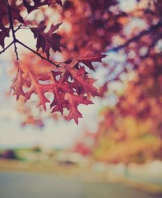 Love the trees until their leaves fall off, then encourage them to try again next year. -Chad Sugg