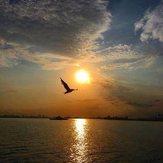🍭 Sunrise, Birds, Silhouette, Celestial, Nature, Outdoor, Frames, Outdoors, Bird