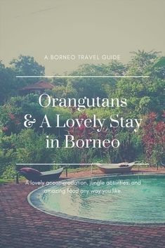 Wild Orangutans & A Lovely Stay in Sabah, Borneo Borneo Travel, Malaysia Travel, Asia Travel, Kuala Lumpur, Amazing Destinations, Travel Destinations, Jungle Activities, Penang, Backpacking Asia