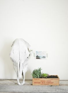 #gifts, #garden, #succulent, #cactus, #diy, #potted-plants, #home-decor, #skull  Photography: Wildfolk Studio - www.wildfolkstudio.com  Read More: http://www.stylemepretty.com/living/2014/03/21/vintage-wood-box-succulent-garden/