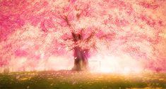애니 속 벚꽃 배경을 한 곳에 모아봤다!   인스티즈