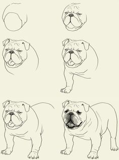 how to draw a bulldog face step by step