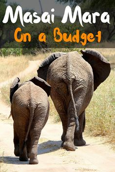 Masai Mara On a Budget Pinterest