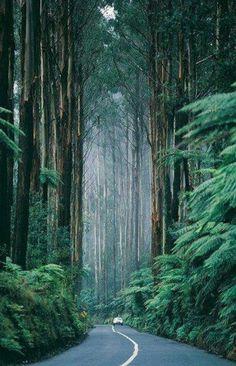Road through the tall sequoias