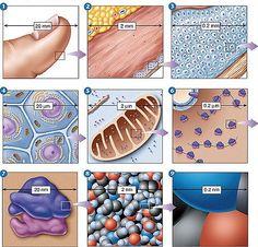 cell size comparisons
