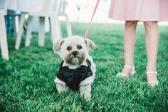 Puppies at weddings! Pet Lovers! Utah wedding photographer, Utah wedding photography, wedding ideas, unique wedding ideas, outdoor wedding, ceremony photos, McKenna Rose Photography, Salt Lake City Photographer, Family photographer, portrait photographer,