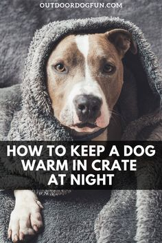 Like you, your dog requires protection from the cold winter weather. Cute sweaters and jackets will make them look adorable. But how to keep your dog warm in a crate at night? There are a couple of ways to keep your best pal warm in the winter in his crate. #dogs #dogcrate #dogcare Training Your Puppy, Dog Training Tips, Dog Care Tips, Pet Care, Dog House Kit, Plastic Dog Crates, Living With Dogs, Group Of Dogs, Hiking Dogs