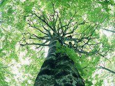 auxilioemocional.blogspot.com.br: Poemas -Rabindranath Tagore
