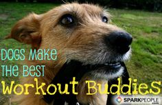 Research shows that when it comes to fitness buddies, 4 legs are better than two. Here's why! | via @SparkPeople