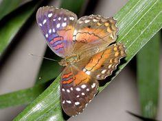 Butterfly_CUS3433x, by DansPhotoArt, via Flickr