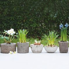 Make a Variety of Shapes with Concrete  Choose container shapes that complement your garden's style, and make sure plants will have a suitable container in which to thrive. Drill drainage holes into your planters after the concrete has set, or place a cork or piece of foam in the bottom when forming the pots. When you water concrete planters, they will darken, then lighten as they dry.