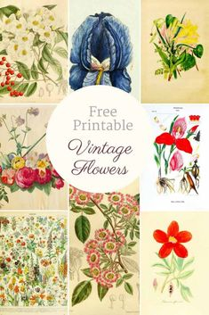 These free vintage botanical prints would be great for decorating your home for fall. They look lovely in a gallery or can simple be used for decoupage. Vintage Flower Prints, Vintage Botanical Prints, Vintage Flowers, Vintage Abbildungen, Vintage Images, Wedding Vintage, Vintage Floral, Printable Flower Pictures, Free Printable Art