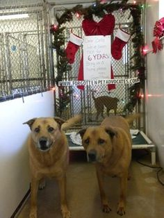 Texas dogs born in boarding six years ago, still waiting for family>>> It has finally happened, 2 dogs who spent life in boarding will have a new home