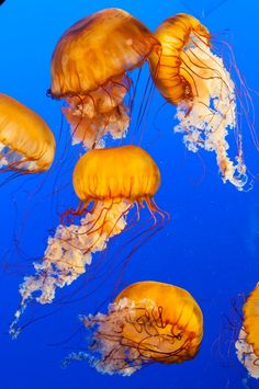 A trip to the Vancouver Aquarium.