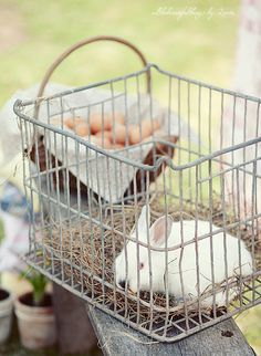 Old McDonald had a shopping cart filled with a bunny, basket and biscuits Country Charm, Country Life, Country Girls, Country Living, Country Roads, Country Bumpkin, Country Strong, Cox And Cox, Farms Living