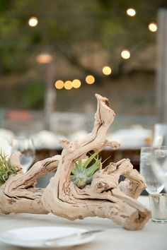 Idées décoration  Driftwood and air plants.  www.alison-laureen-weddings.com