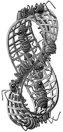 MC Escher - Ants on a Moebius Strip Mc Escher Art, Escher Kunst, Escher Drawings, Math Art, Dutch Artists, Art Database, Op Art, Animal Paintings, Optical Illusions