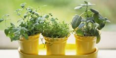 7 Reasons Your Herb Garden Keeps Dying - GoodHousekeeping.com