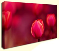 Simply Canvas have a great variety of canvas wall prints. Abstract wall art from only Wall Prints, Canvas Art Prints, Canvas Wall Art, Abstract Canvas Art, Tulip, Products, Tulips, Gadget, Painted Canvas