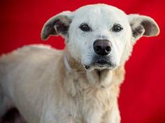 Foster home can no longer keep sweet senior dog who endured life of neglect http://www.examiner.com/article/foster-home-can-no-longer-keep-sweet-senior-dog-who-endured-life-of-neglect … via @examinercom