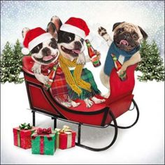 Pack Of  Festive Dogs Princes Trust Charity Christmas Cards Cards Love Kates Charity