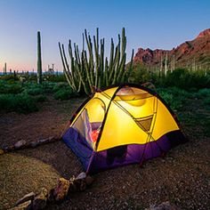 Twin Peaks Campground, Organ Pipe Cactus National Monument: So far south it's almost in Mexico, this park flaunts an array of desert flora, including the sentinel-like saguaro and the organ pipe cactus.
