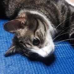 키키보게 집에 보내줘.... #1d1pic #kiki #cat #kitty #catstagram #pet #petstagram #catlovers #냥스타그램 #고양이 #키키 by kiki_in_house http://www.australiaunwrapped.com/