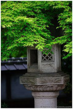 Stone lantern under maple foliage, Lord Hozokawa's house