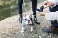 22 Cute Engagement Announcement Ideas You'll Want to Copy - Trust us—you won't want to spill the beans until you've seen these cute and creative engagement announcement ideas. dog ring proposal pet cute engaged {Kir2Ben} Creative Engagement Announcement, Engagement Photos, Real Couples, Proposal, Boston Terrier, French Bulldog, Trust, Beans, Photoshoot