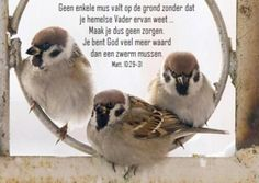 Afrikaanse Quotes, Religious Text, Believe In God, Animals Images, Friends Forever, Christian Quotes, Bible Verses, Vader, Birds