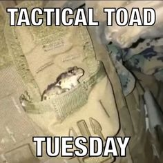 Funny Frogs, Cute Frogs, Sapo Frog, Funny Animals, Cute Animals, Frog Meme, Frog Pictures, Pinterest Memes, Frog And Toad