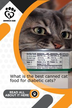 Diabetic cats need a special diet to thrive - Get more information at AnimalsA2Z.com. Low Protein Foods, Protein Diets, High Protein Recipes, No Carb Diets, Canned Cat Food, Dry Cat Food, Zero Carb Diet, Kidney Disease Stages