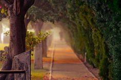 joggers walk